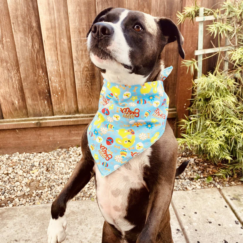 Happy Easter Bandana for Dogs and Other Pets