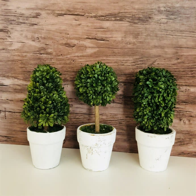 Mini Topiary Trees Set Of 3 Jane