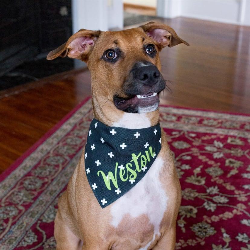 Custom personalization bandana add-on Custom Dog Bandana | Custom Personalization iron-on Personalized Dog Bandana