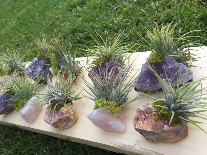 Crystal Air Plants Free Shipping Jane