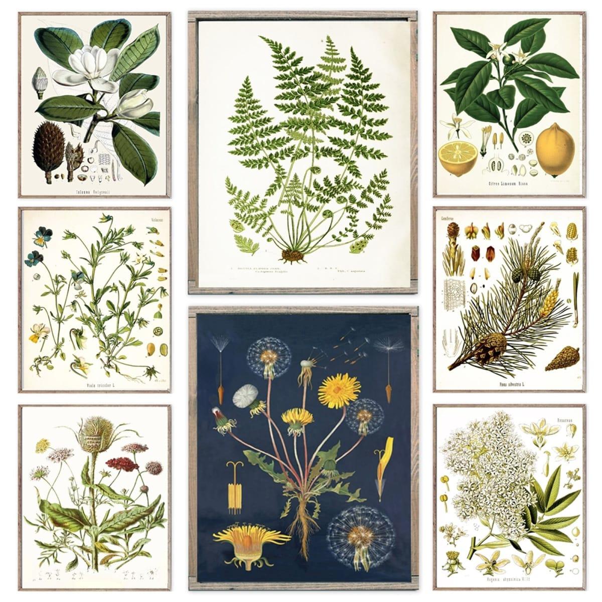 Rustic Botanical Illustrations
