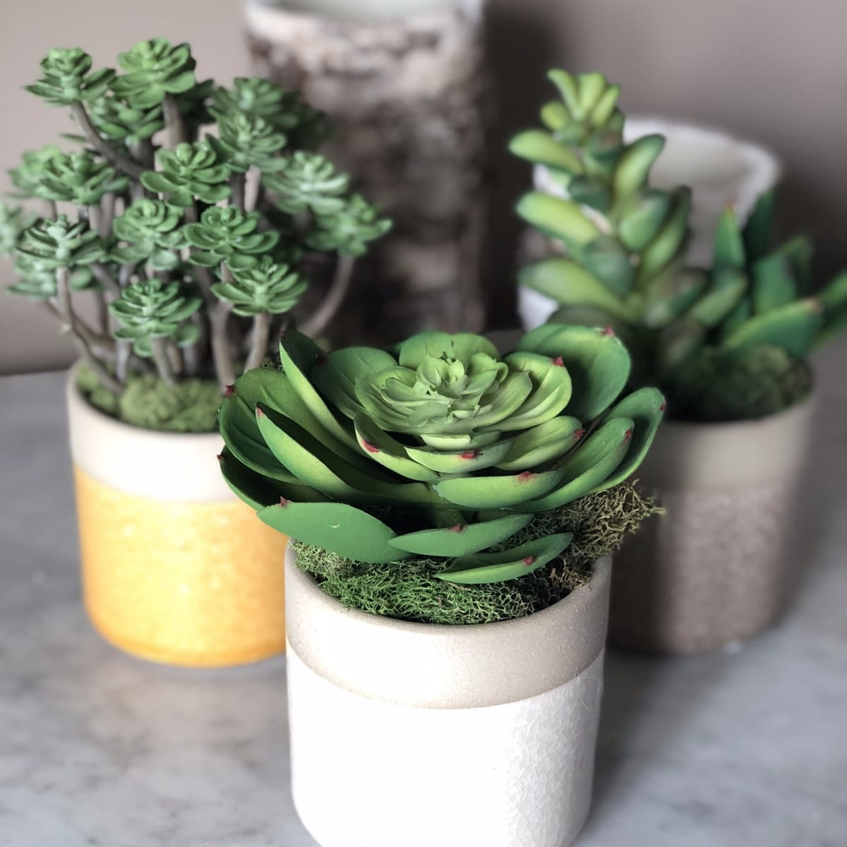 Ceramic Pots with Faux Succulents / Set of 3